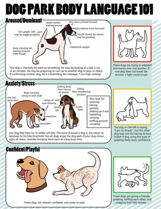 Dog Body Language Chart Decoding Behavior Dog Body Language Dog