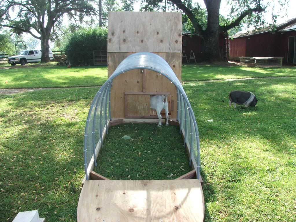 Goat Shelter Plans | The Pygmy goat found it was easy to find the ...
