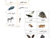 حيوانات تهاجر او تبات في الشتاء 24 بطاقة مونتسوري ثلاثة اجزاء للمطابقة Art