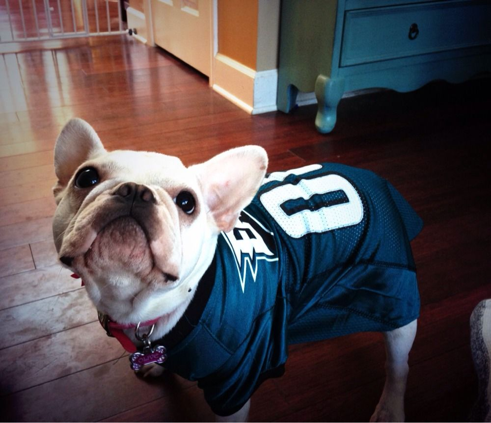 Flyeaglesfly On Nationaldogday Cute Animals Pets Fly Eagles Fly