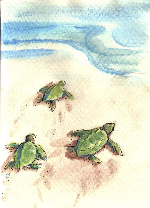 Sweetest Little Baby Turtle Drawing Cindyandersonartist On Etsy