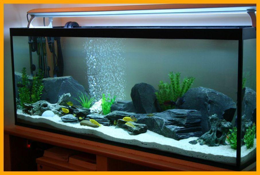 Image result for aquarium design