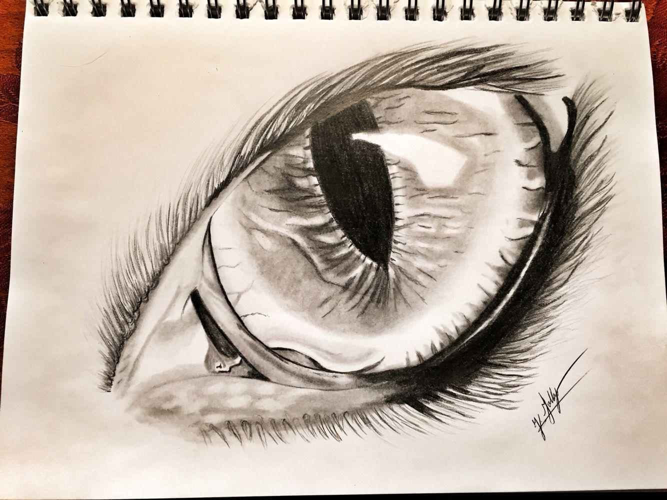 Eagle eye drawing art sketches instagram just in artist oiseaux pinterest oiseaux
