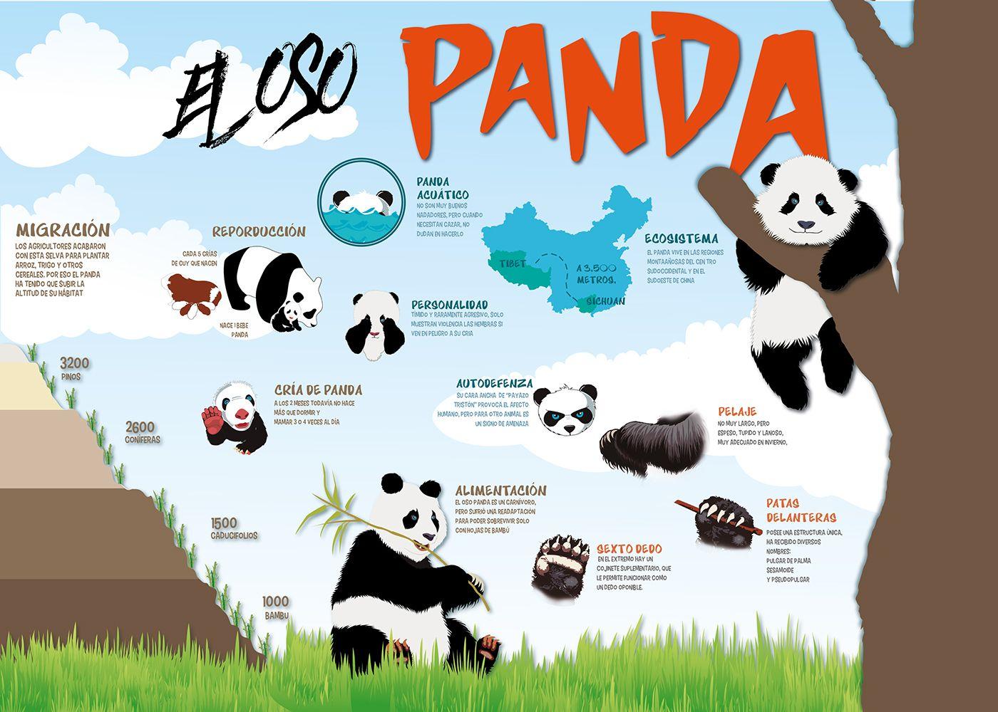 Infografia Sobre El Oso Panda On Behance