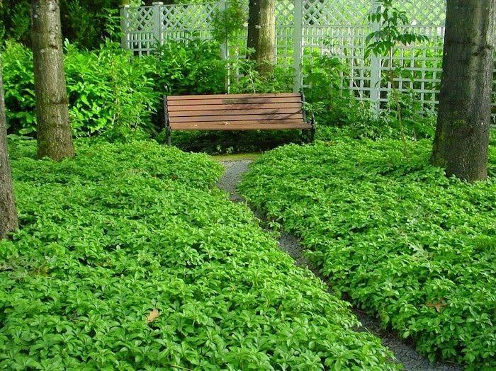 Plante Couvre Sol Un Tableau De Couleurs Naturelles Dans Votre