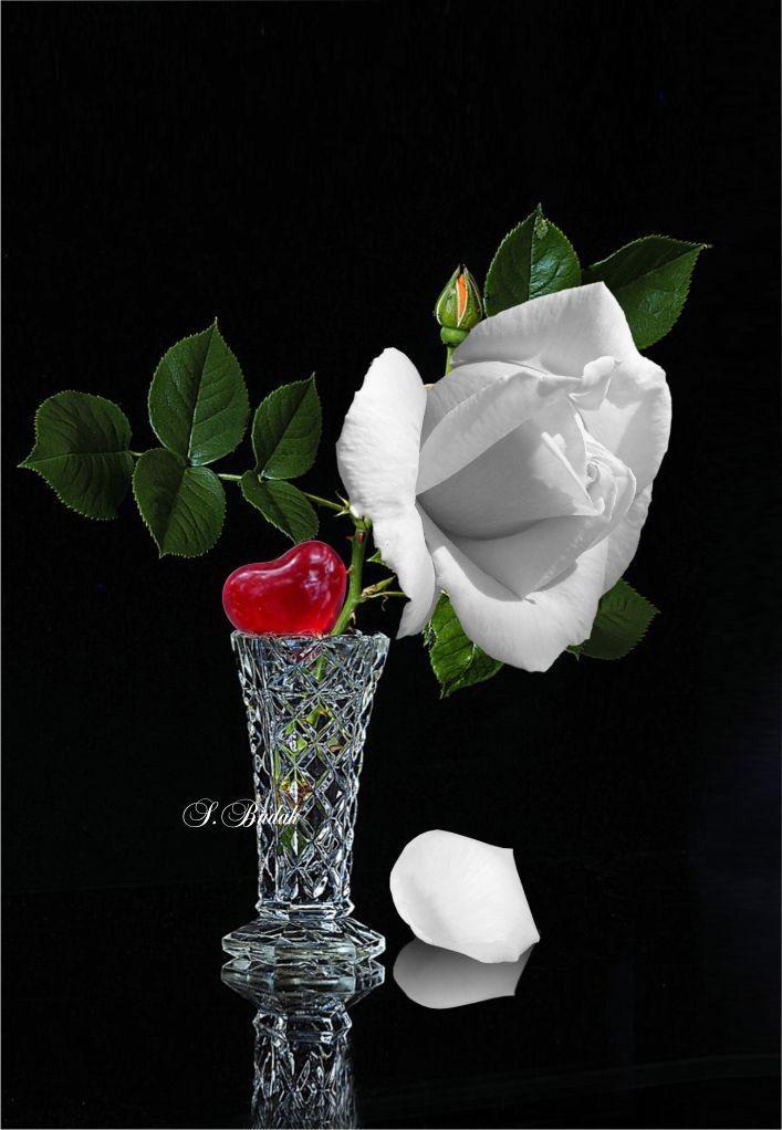 ❥○❥ ♥ ♥ ❥○❥   ccc   Beautiful roses, Love flowers