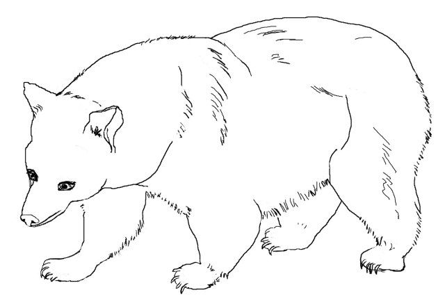 27+ Pretty Picture of Brown Bear Brown Bear Coloring Pages ...