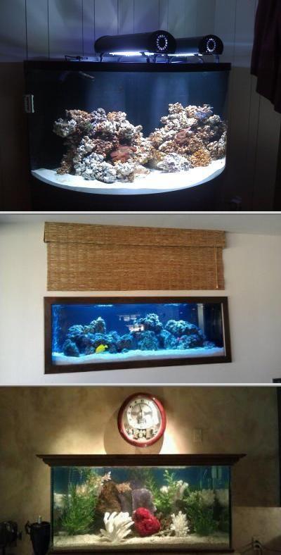 Sunset Aquatics specializes in saltwater aquarium