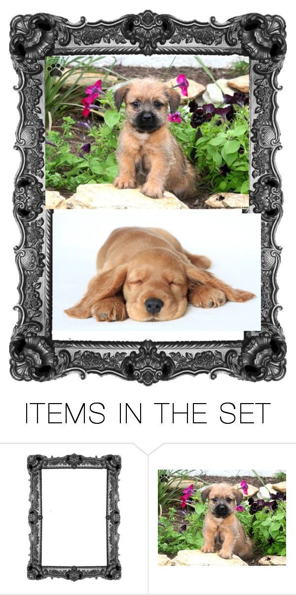 """""""puppylove555"""" by jordanbond55 ❤ liked on Polyvore featuring art"""