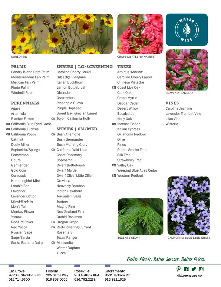 Green Acres Nursery Supply Large Selection Of Drought Tolerant Plants For Northern California