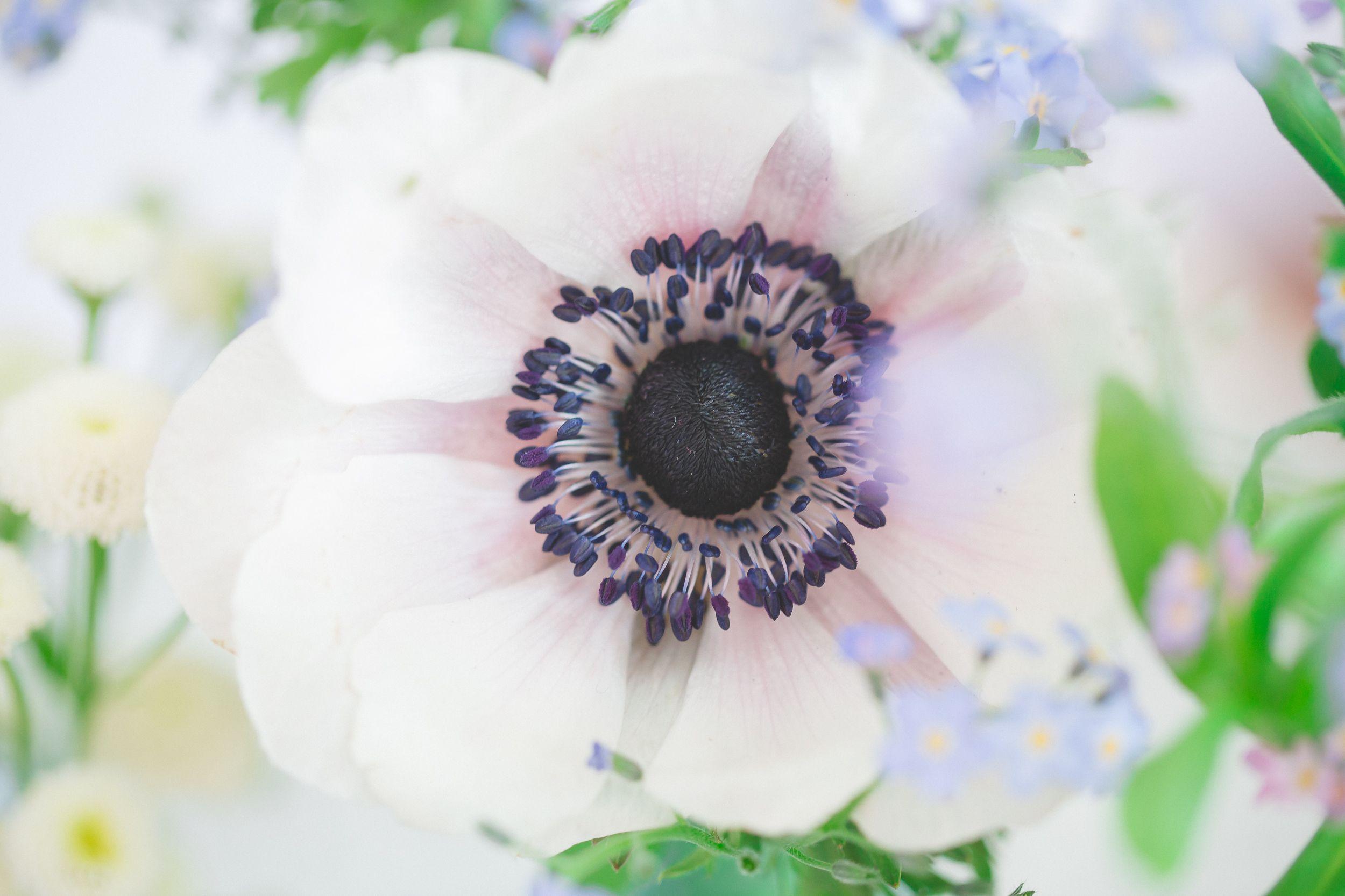 Anemone,Hochzeitsfloristik, Weddigflower, https://www.facebook.com/SonjaKlein.Blumig Foto: http://stefanie-heitmueller.de