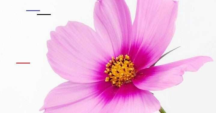 Paling Keren 13 Gambar Wallpaper Whatsapp Bunga Unduh Kumpulan Gambar Bunga Cantik Untuk Wallpaper Wa H In 2020 Beautiful Flowers Pictures Wallpaper Decorating Blogs