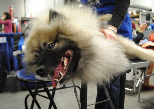 Our Favorite Backstage Moments From the 2013 National Dog Show Presented by Purina