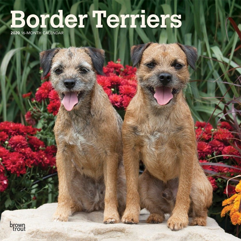 A Good Natured Loving Companion The Borderterrier Was