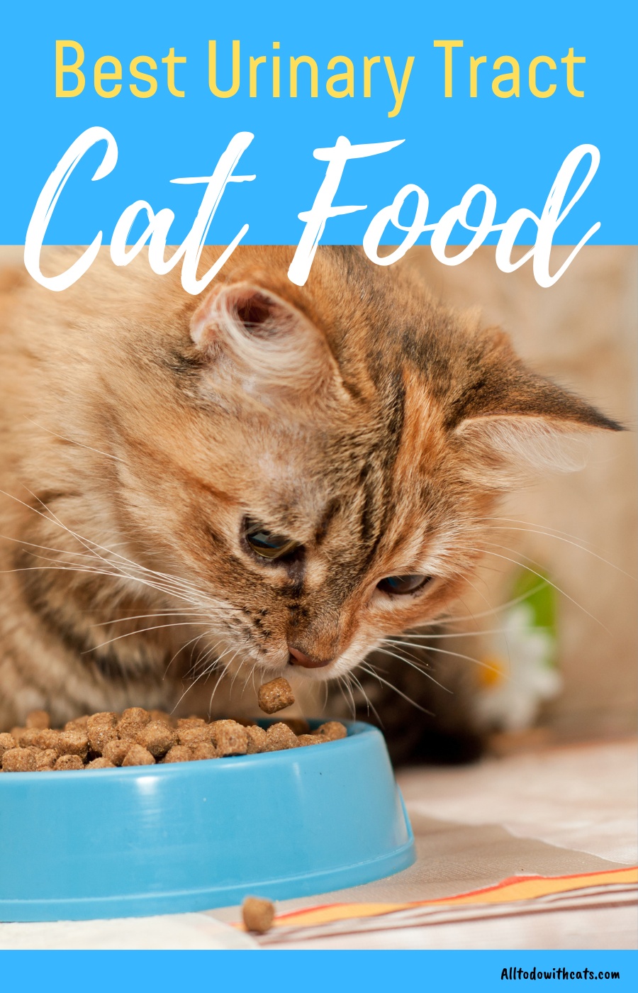 Best Urinary Tract Cat Food To Support Your Kitty S Urinary Health Urinary Tract Cat Food Kitten Health Urinary Health