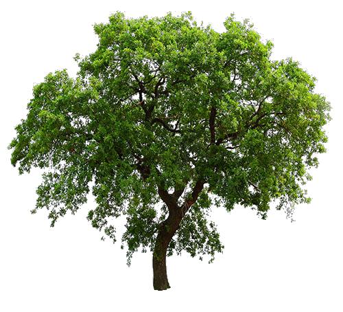 arbre d tour formes d tour es coupes pinterest arbre 3d les mauvaises herbes et. Black Bedroom Furniture Sets. Home Design Ideas