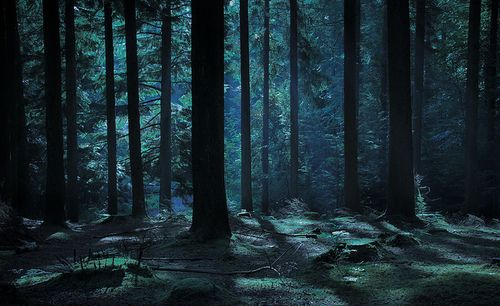 The Woods at Night by @MWolstenholme on Flickr. | Night ...