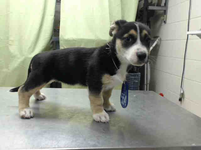 03 11 15 Houston Hurry Puppy Alert This Dog Id A427519 I Am