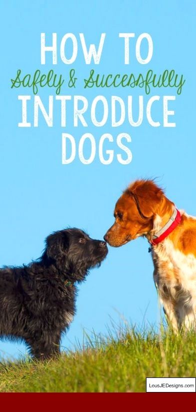 How To Train Your Dog To Obey You And Pics Of Leash Training Tips For Puppies Tip 3826496 Dog