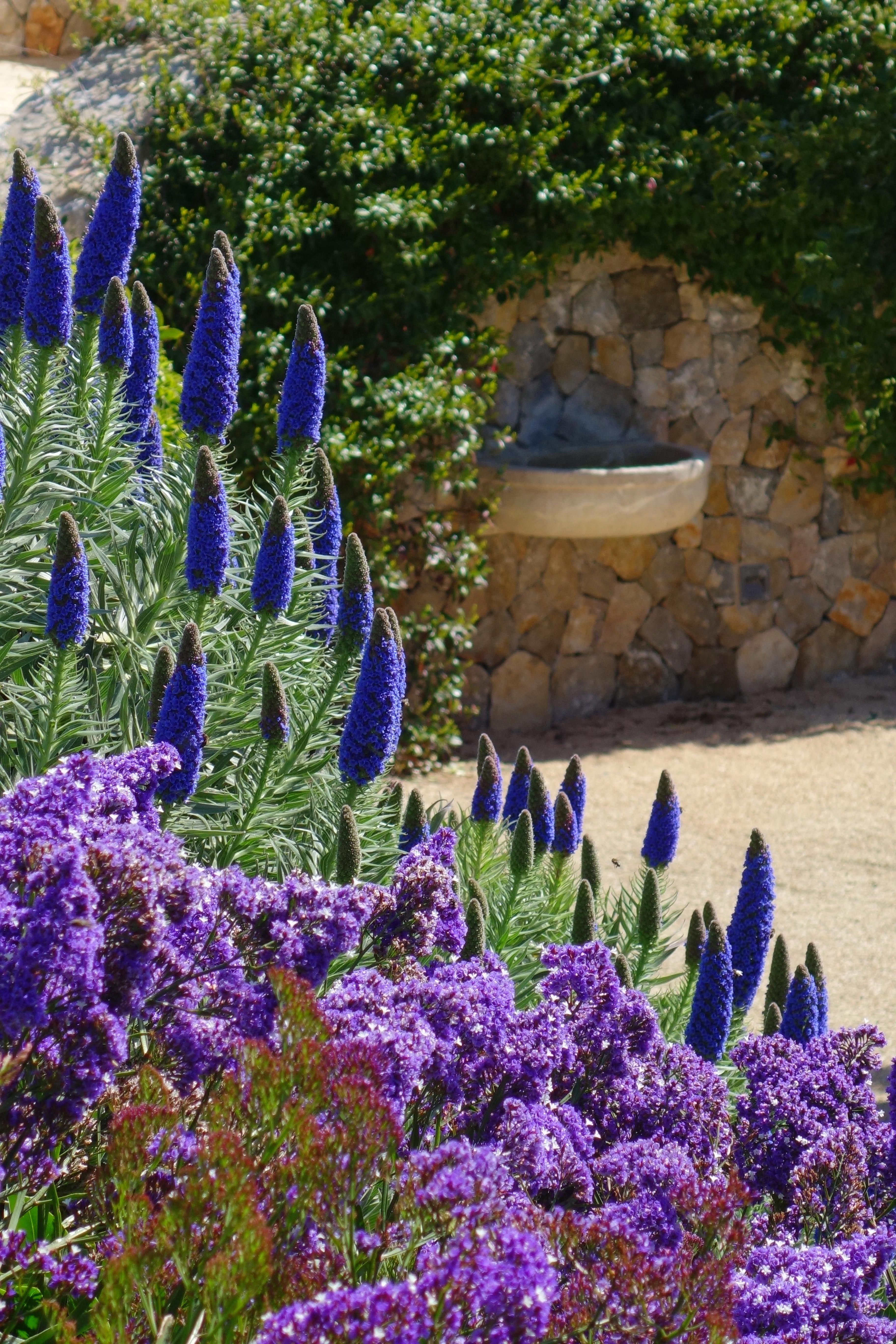 Most Colourful Mediterranean Plants Mediterranean Garden Plants