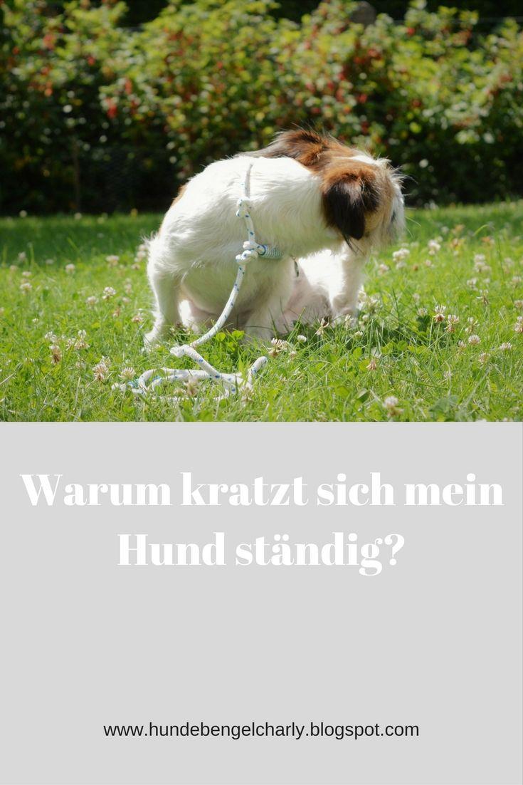 Warum Kratzt Sich Mein Hund Standig Hunde Gesunde Hunde Tiere