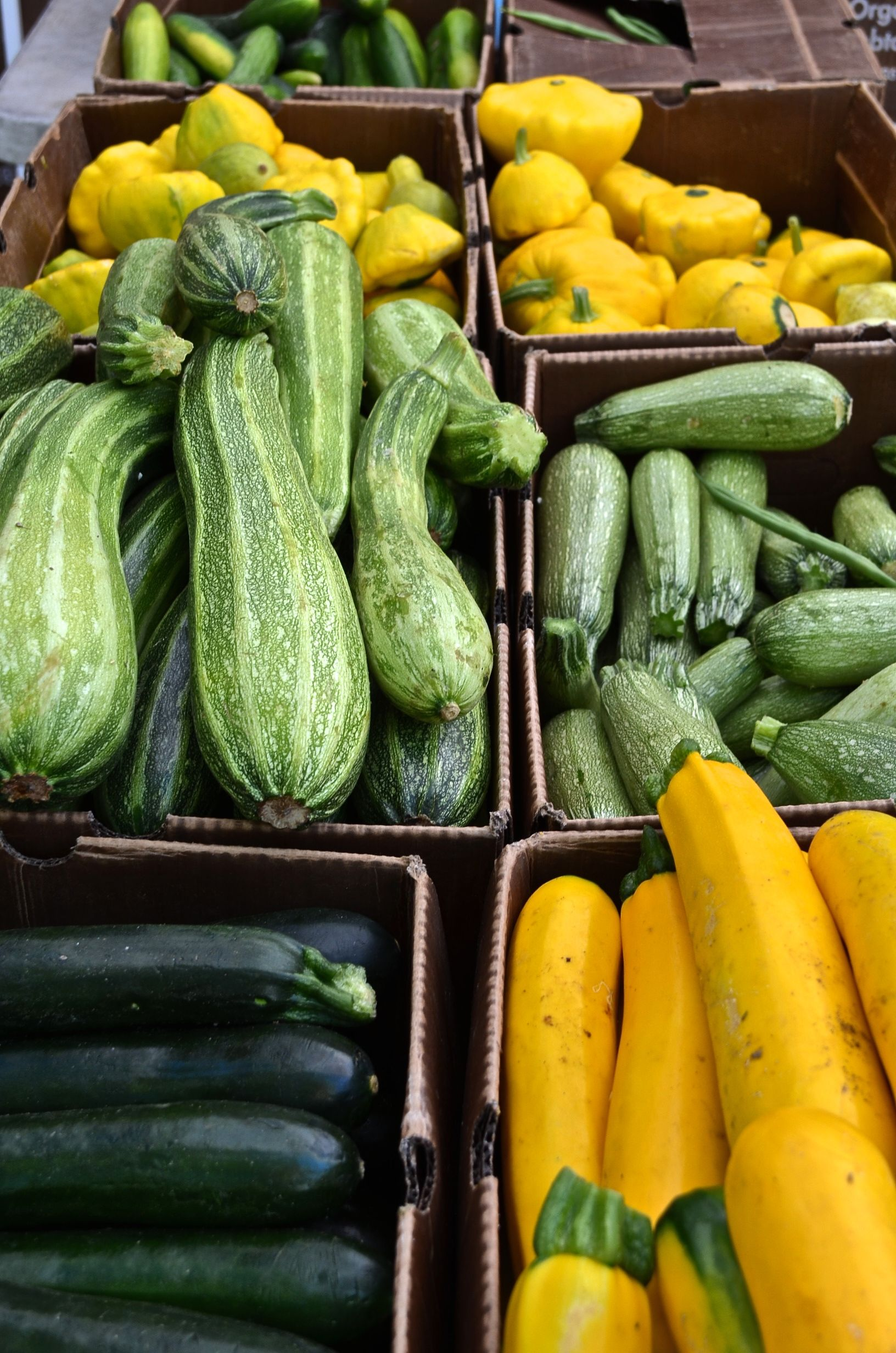 Lovely, colorful zucchini and cucumber. Farmers market