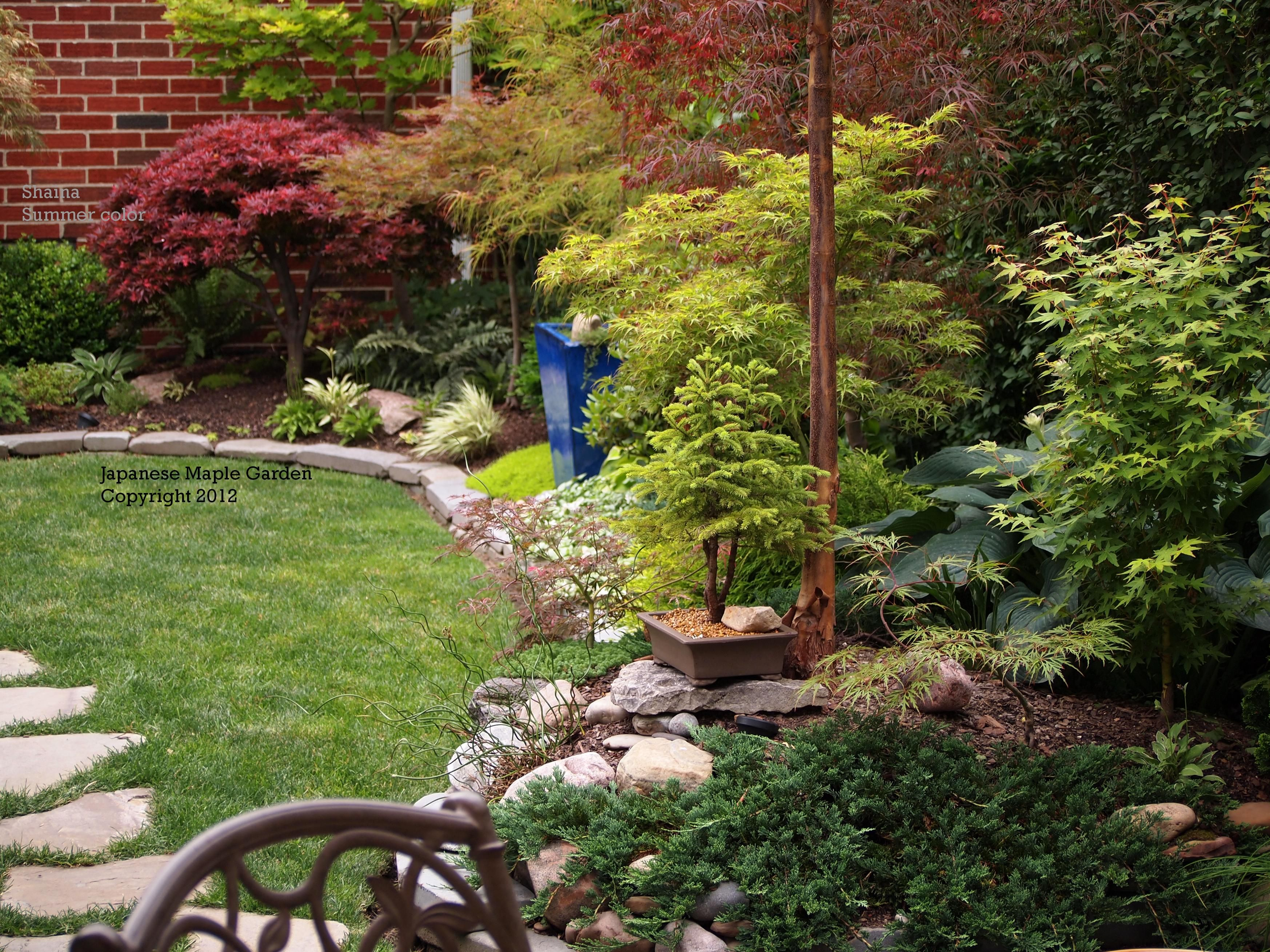 Beautiful layering of dwarf Japanese maples in a landscape ...