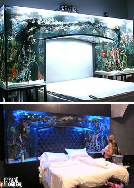 fish tank above bed | Aquarium gestalten, Aquarien und Fisch ...