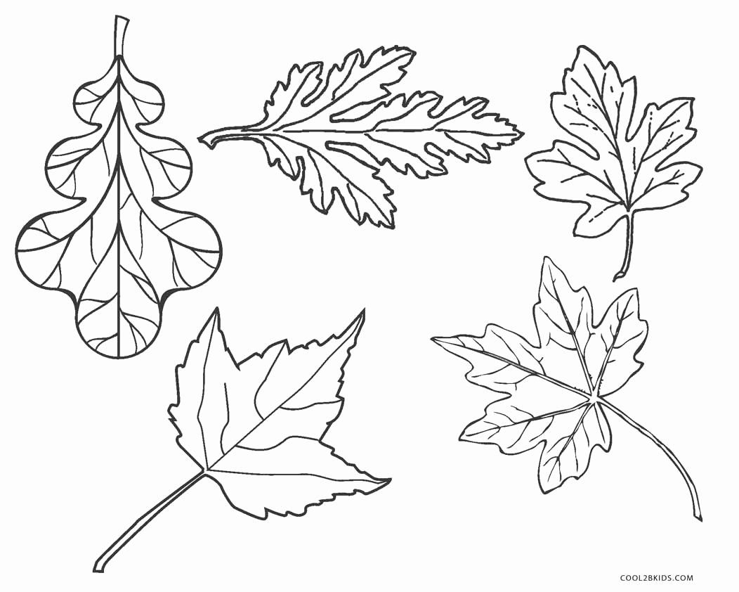 Fall Leaf Coloring Page Inspirational Free Printable Leaf Coloring Pages For Kids In 2020 Leaf Coloring Page Unicorn Coloring Pages Fall Leaves Coloring Pages