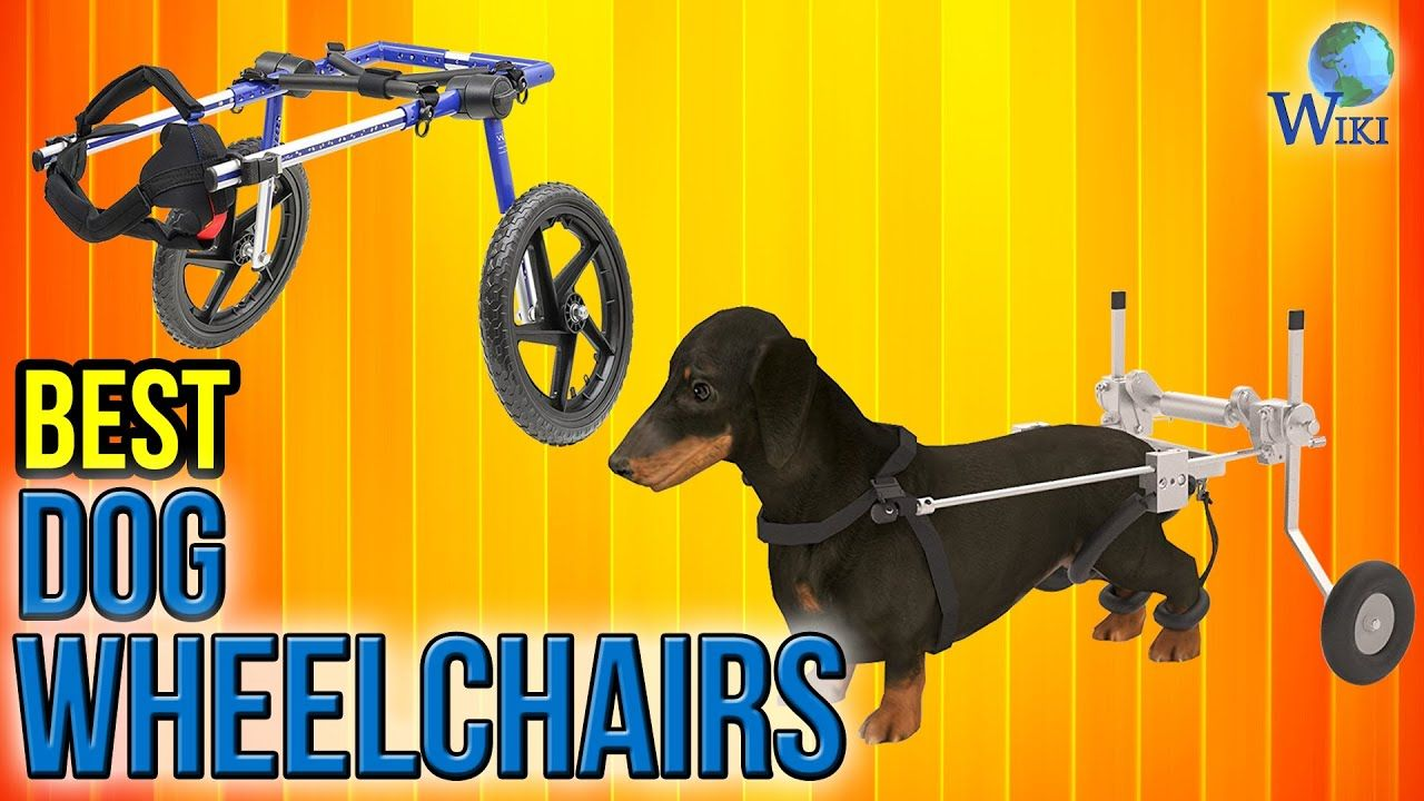 Best Dog Wheelchair Reviews [2019] Dog wheelchair
