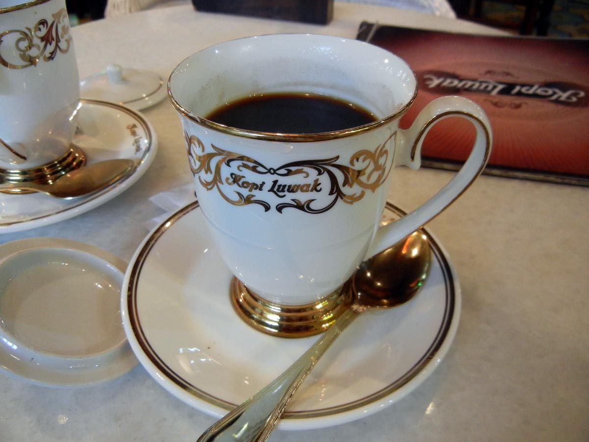 kopi luwak in semarang, indonesia