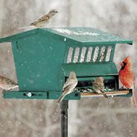 Absolute Bird Feeder
