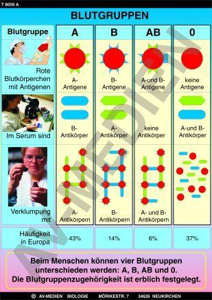 Blutdiät 0 negativ