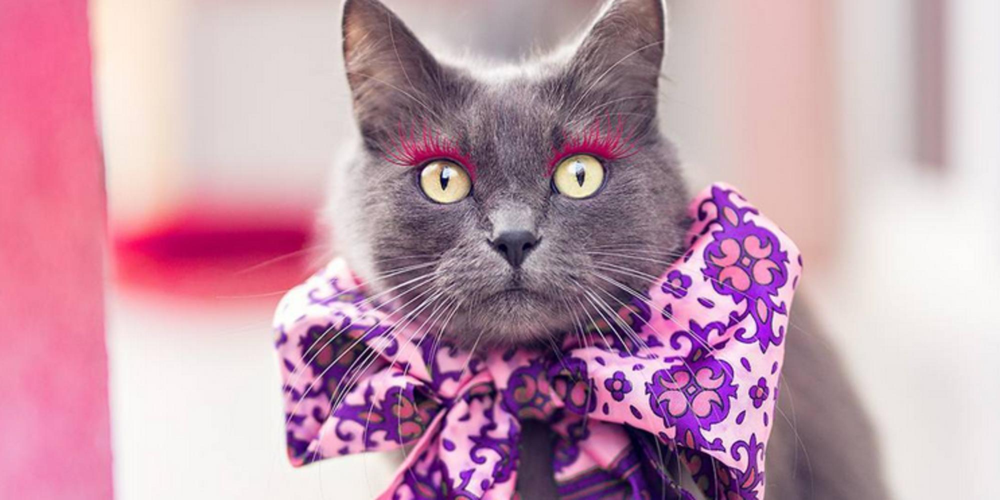 Cat With Fake Eyelashes Instagram Star Beautiful