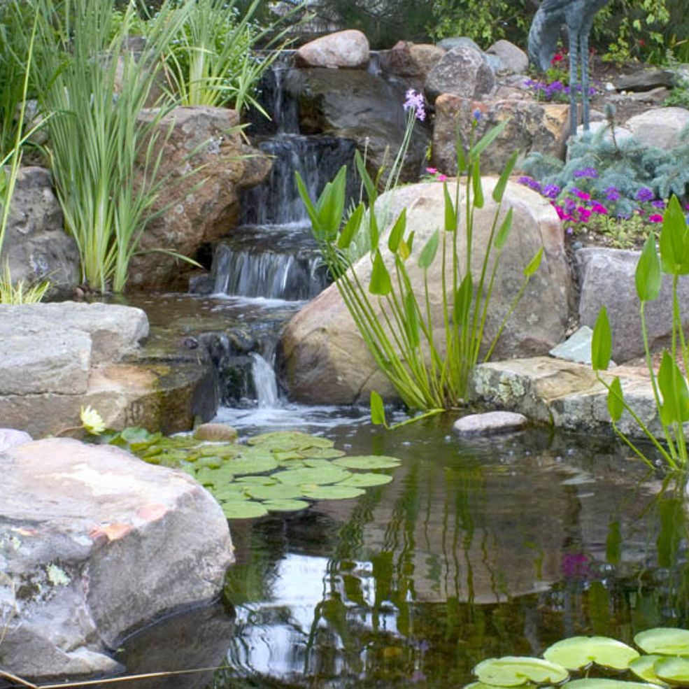 Small Water Gardens Ponds backyard, Pond landscaping