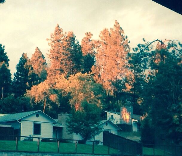 Sunset hitting the trees, makes it look like Fall