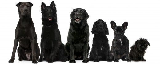 60 Names For Black Dogs Male Female Badass And Funny From