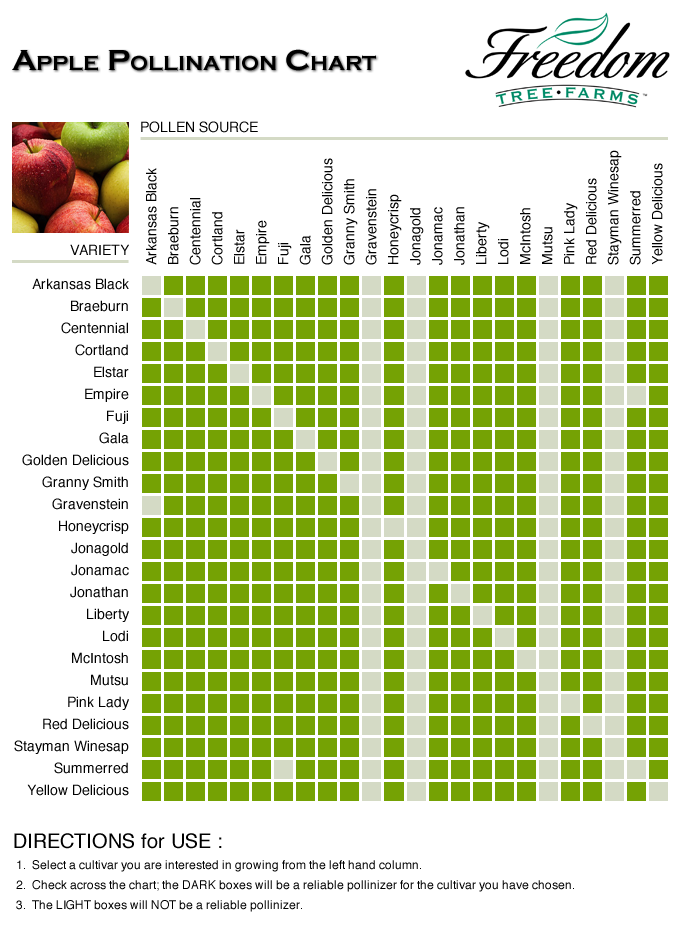 Apple pollination chart projects pinterest organic gardening