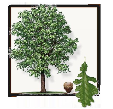 Pin On Fannin Trees