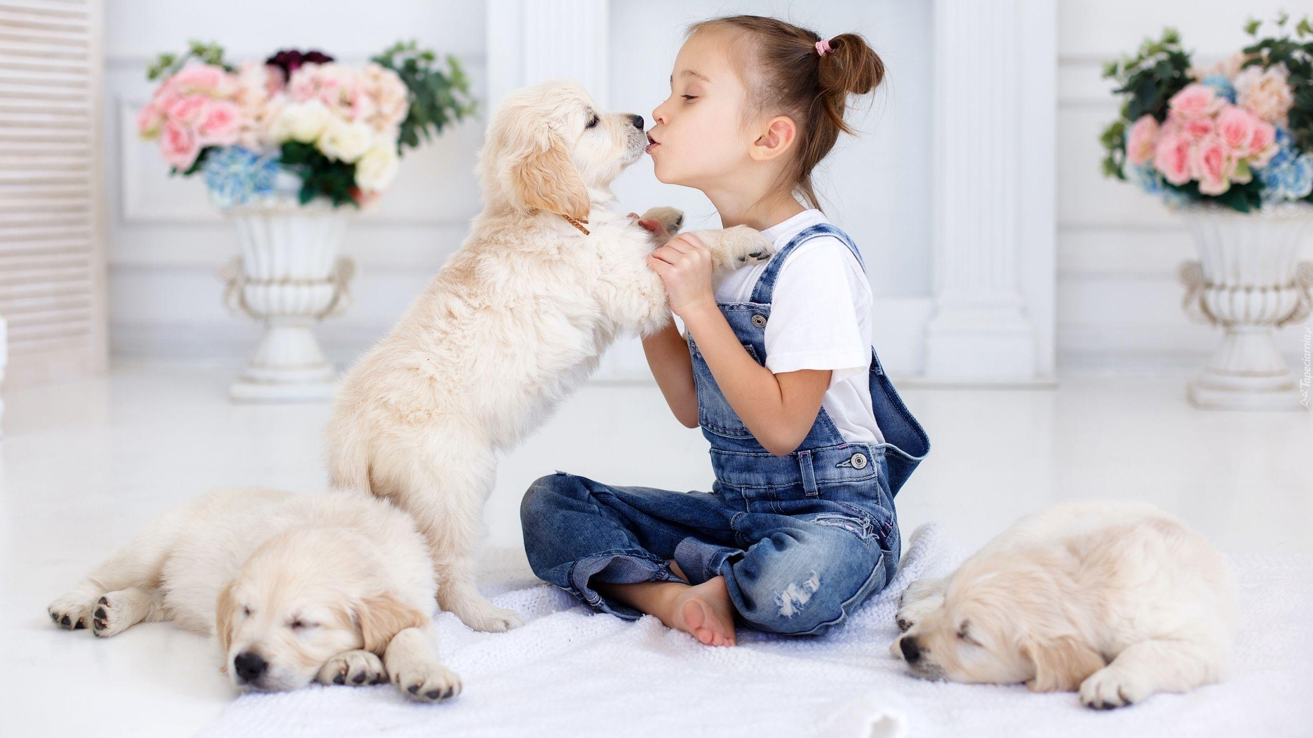 Dziewczynka Trzy Psy Szczeniaki Golden Retrievery Puppy Photography Puppies Puppy Photos