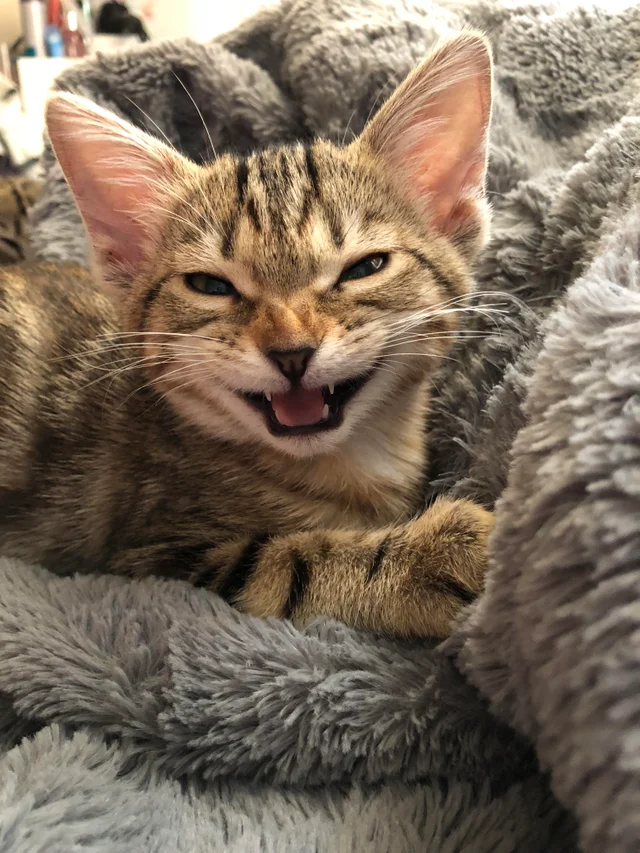 reddit the front page of the Cute animals