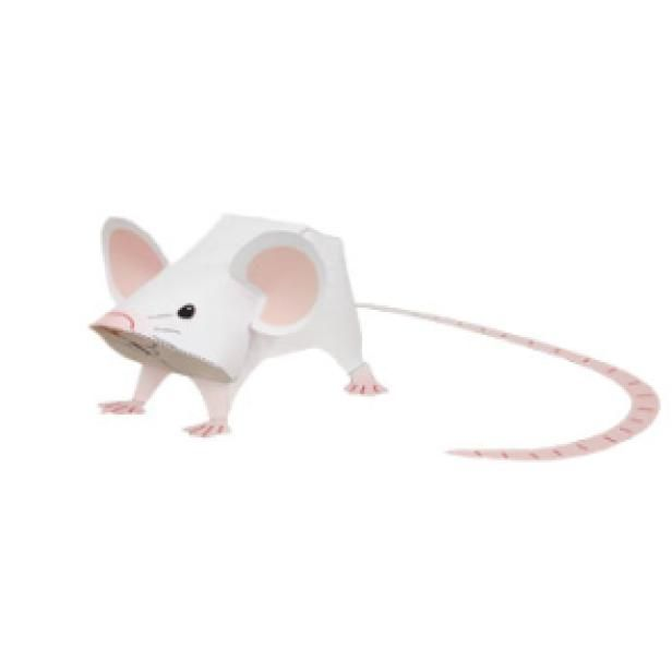 Mouseanimalspaper Craftwhiteanimalsmousepaper Crafteasy