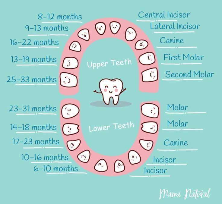 4 handy teeth chart for a trouble free baby teething baby