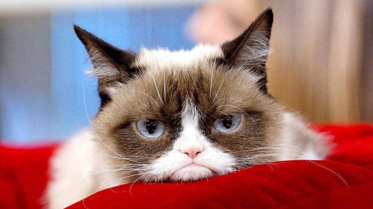 Phenomenon Grumpy Cat Dead at 7 'Some Days Are