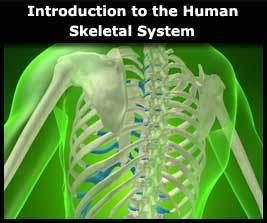 Introduction to the Human Skeletal System Online Course | Online courses