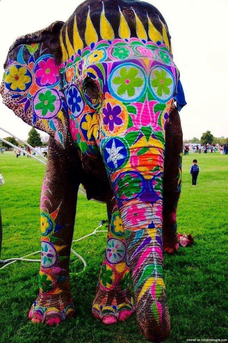 Painted elephant festival in India. Elephant love