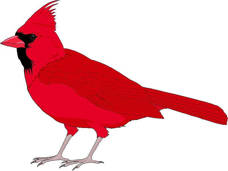 Cute Cardinal Clipart Clip Art Library Funny Bird Pictures Bird Clipart Clip Art