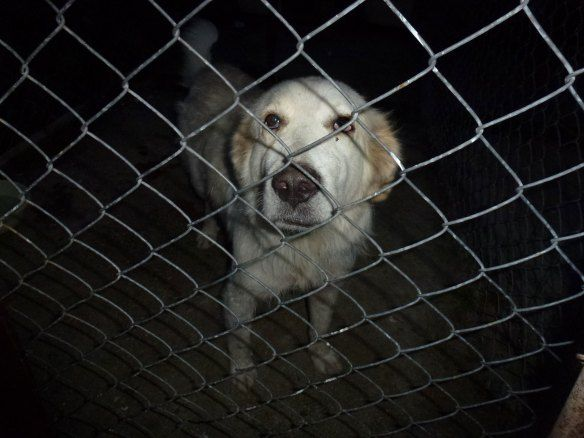 Bosnia Urgent Rescuers Need Help Support Activists Case Is Case Against All Activists And Advocats And Against Thousands Of Dogs Animal Rescue Pet Organization Dog Cat