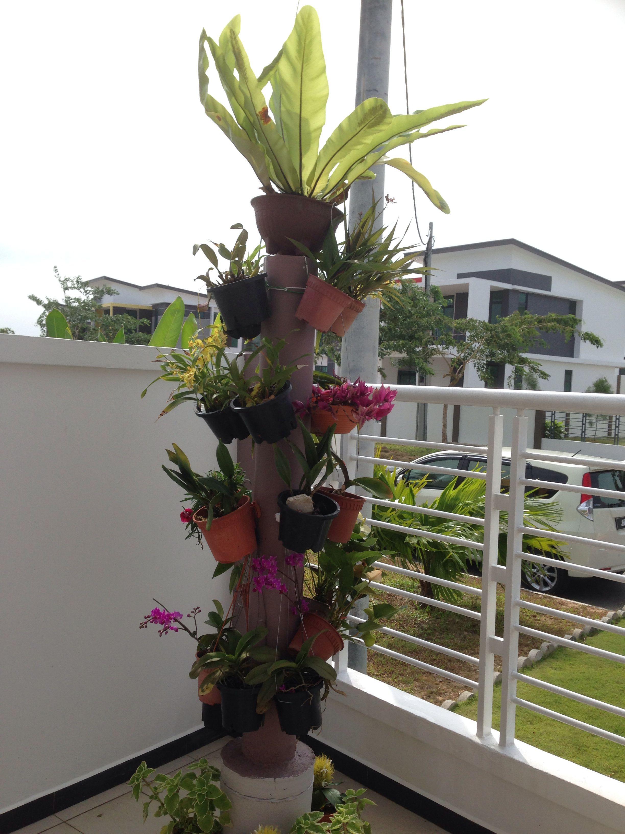 Diy orchid pillar diy orchids plants orchids