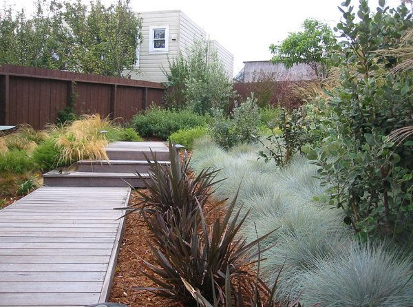 Native grasses in a modern yard | front yard grasses ...